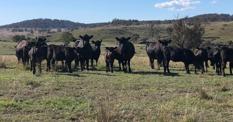A way forward for Australian Farming and Regional Communities – Regenerative Agriculture